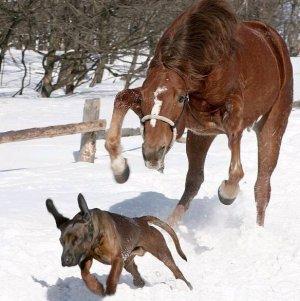 horse vs. dog